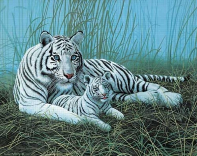 White Tigers in the Mist - 1000pc Jigsaw Puzzle by White Mountain