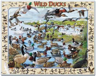 Wild Ducks - 1000pc Jigsaw Puzzle By White Mountain