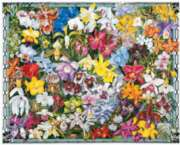 Jigsaw Puzzles - Orchids