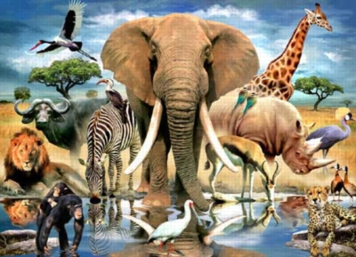 African Oasis - 550pc Jigsaw Puzzle by White Mountain