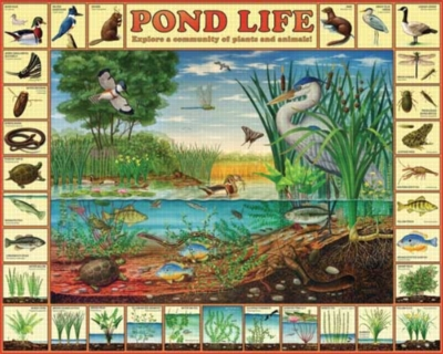 Pond Life - 1000pc Jigsaw Puzzle by White Mountain