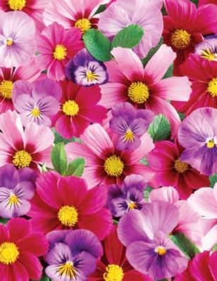 Springbok Large Format Jigsaw Puzzles - Pink 'N Purple Posies