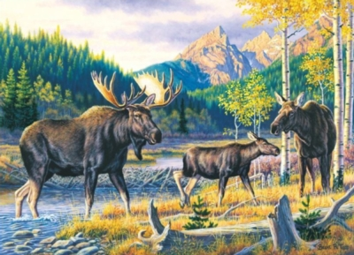 Wildlife Masters: Family Pass - 1000pc Jigsaw Puzzle by Masterpieces