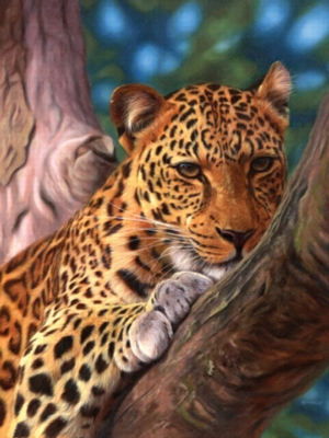 Leopard in a Tree - 500pc Jigsaw Puzzle by Ravensburger