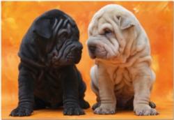 Educa Jigsaw Puzzles - Sweet Puppies