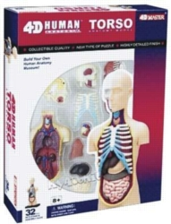 Educational Puzzles - Human Torso