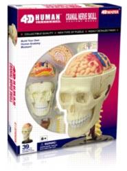 Educational Puzzles - Human Cranial Nerve Skull