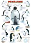 Penguins - 1000pc Jigsaw Puzzle by Eurographics