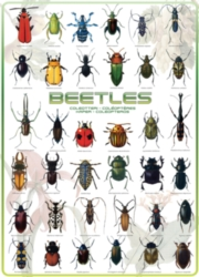 Eurographics Jigsaw Puzzles - Beetles