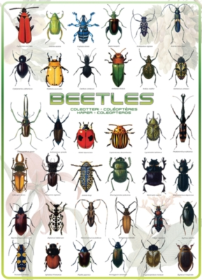 Eurographics Jigsaw Puzzles - Beetles