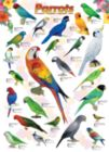 Parrots - 1000pc Jigsaw Puzzle by Eurographics
