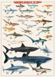 Eurographics Jigsaw Puzzles - Dangerous Sharks of the World