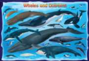 Eurographics Jigsaw Puzzles - Whales & Dolphins