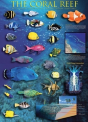 Eurographics Jigsaw Puzzles - Coral Reef