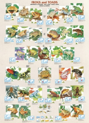 Eurographics Jigsaw Puzzles - Frogs & Toads