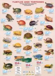 Eurographics Jigsaw Puzzles - Turtles & Tortoises