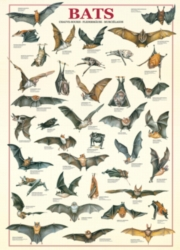 Eurographics Jigsaw Puzzles - Bats