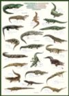 Crocodiles and Alligators - 1000pc Jigsaw Puzzle by Eurographics