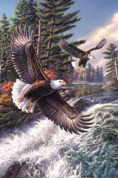 Jigsaw Puzzles - Whitewater Eagle