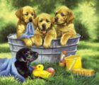 Squeaky Clean - 200pc Jigsaw Puzzle By Sunsout
